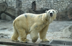 zoopark2.jpg