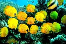 Рыбки.jpg