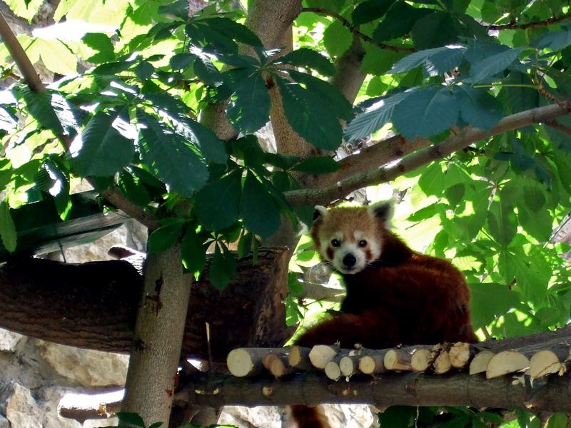 животное на дереве.jpg