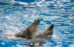 Дельфин 6