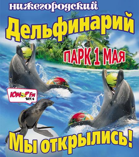 Дельфин 11